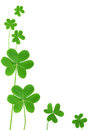 Green clover Stock Photography