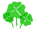 Green clovers isolated Royalty Free Stock Photography