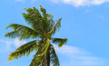 Green coco palm leaves on blue sky background. Palm tree and cloudy blue sky photo