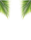 Green coconut leaf on white background Royalty Free Stock Photo