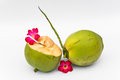 Green coconuts over white background Royalty Free Stock Photography