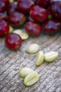 Green coffe coffea arabica with fresh berries Royalty Free Stock Photos