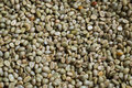 Green coffee bean after pulping hulling and cleaning Royalty Free Stock Photo