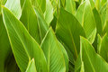 Green color leaves background shot. Royalty Free Stock Photo