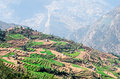 Green and colorful rice field terraces nepal view of Royalty Free Stock Photos
