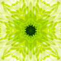 Green concentric flower center mandala kaleidoscopic design macro close up Royalty Free Stock Photography