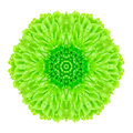 Green concentric flower isolated on white mandala design background kaleidoscopic Stock Photo