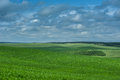 Green corn field and blue sky cloud outdoor shots Royalty Free Stock Photo