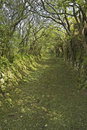 Green Country Lane Stock Photos