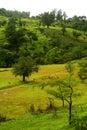 Green countryside landscape Stock Photos