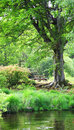 Green countyside landscape picnic table under leafy tree with water in foreground lake district national park cumbria england Stock Photo