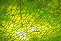 green cracked glass as background Royalty Free Stock Photo