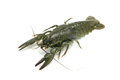 Green crayfish on a white background Royalty Free Stock Image