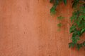 Green creeper on pale orange wall with space the left Royalty Free Stock Photo