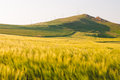 Landscape with green crop field