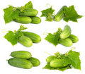 Green cucumber vegetable Royalty Free Stock Photo