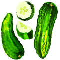 Green cucumber whole and sliced watercolor painting on white background Royalty Free Stock Photo