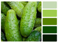 Green cucumbers colour palette swatch with complimentary swatches Royalty Free Stock Photo