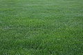 Green Cut Grass Royalty Free Stock Image