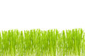 Green cut grass on a white Royalty Free Stock Photo