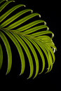 Green cycas leaf Stock Image