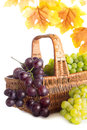 Green and dark grape in the basket with autumn leaves isolated on white Stock Images
