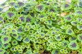 Green desert plant with small leaves Royalty Free Stock Photo