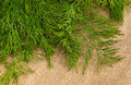 Green dill on the rough fabric as the background Royalty Free Stock Images