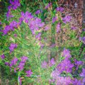 purple flowers bricks multiexposure hipstamatic Royalty Free Stock Photo