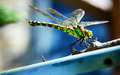 Green Dragonfly On Blue Backgr...