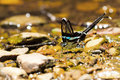 Green dragontail butterfly Royalty Free Stock Photo