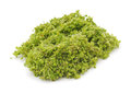 Green duckweed. Royalty Free Stock Photo