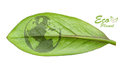 Green earth concept cut leaves plants isolated over white Stock Photos