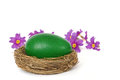 Green easter egg in the nest and spring flowers isolated on white Royalty Free Stock Image
