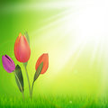 Green eco art design style background with beautiful tulip