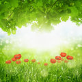Green eco background beautiful nature grass oak leaves bright sun red poppies Stock Photos
