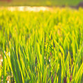 Green eco background fresh grass field landscape view Stock Images