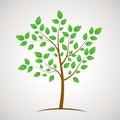 Green eco tree icon with plenty leaves,