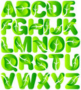 Green Ecology Leaf Alphabet/eps