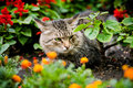 Green-eyed cat sitting among flowers Stock Photography