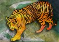 Green eyed tiger adult walking pencil drawing colored with watercolors Royalty Free Stock Photography