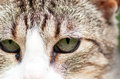 Green eyes tabby cat beautiful Stock Photo