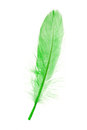 Green Feather Stock Images