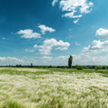 Green feather grass and blue sky mat Royalty Free Stock Photos