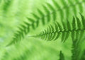 Green Fern Abstract Background Stock Photo
