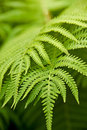 Green fern as background Stock Images