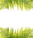 Green fern border Royalty Free Stock Photo
