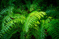 Green fern in forest bush of the Stock Image