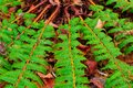 Green fern that launches to the four sides Royalty Free Stock Photo