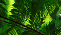 Green fern leafs Royalty Free Stock Photo